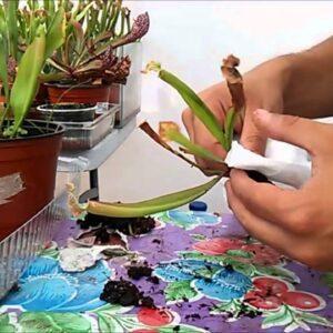 NUESTRA COSECHA - Mudanza con plantas